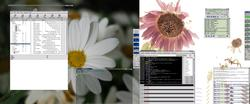 The backgrounds are from Tigert.gimp.org site, nice and flowery - E theme is Rebound - GKrellM is photon and minegue respectiviley, as well as the XMMS skin
